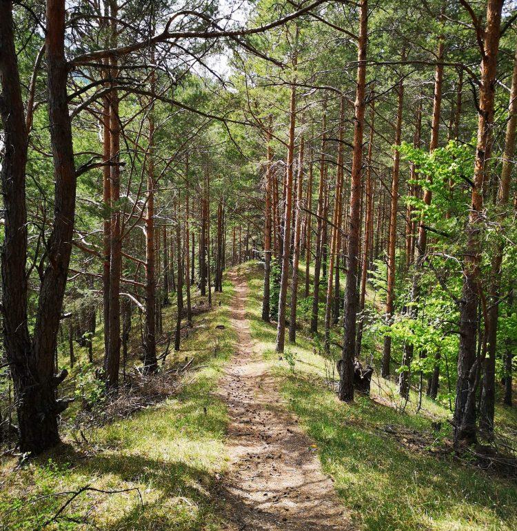 Cesta na Znievsky hrad