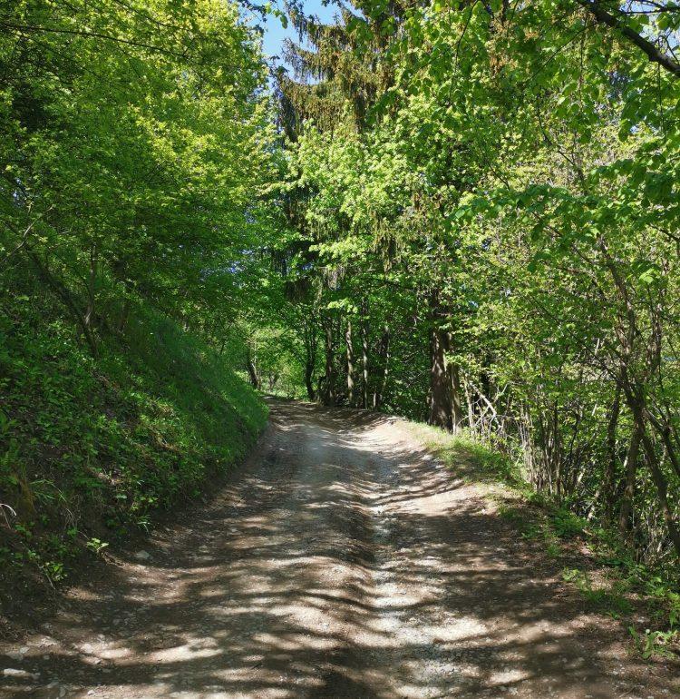 Cesta na hrad Sklabina