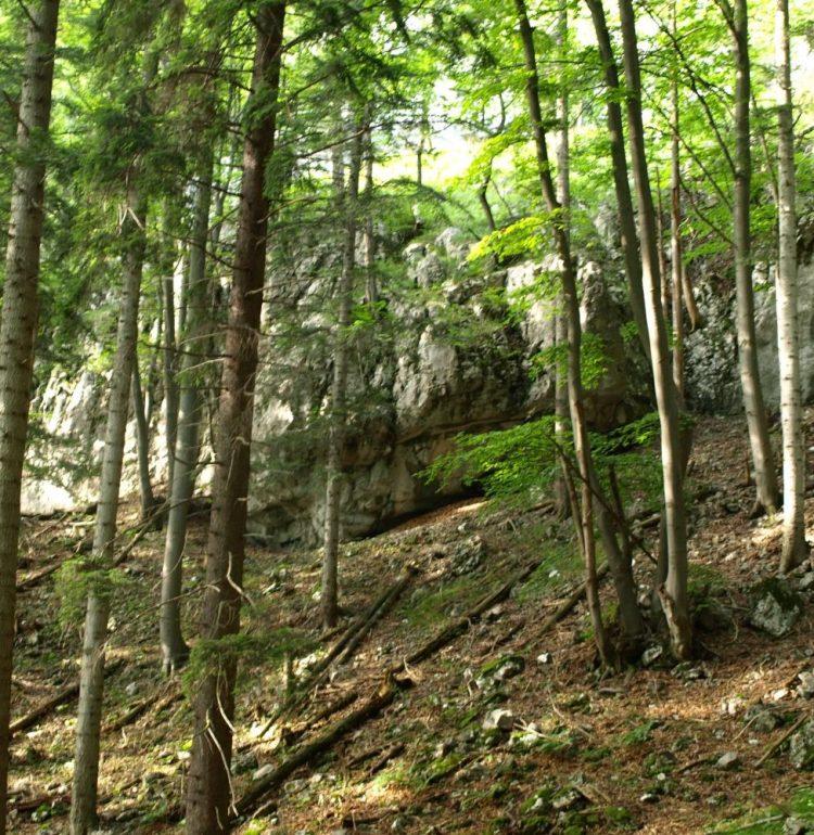 Cesta po Vápennej doline