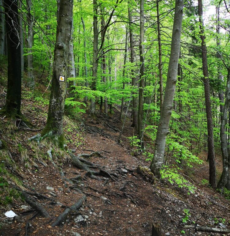 Turistický chodník na výstup k hradu Blatnica