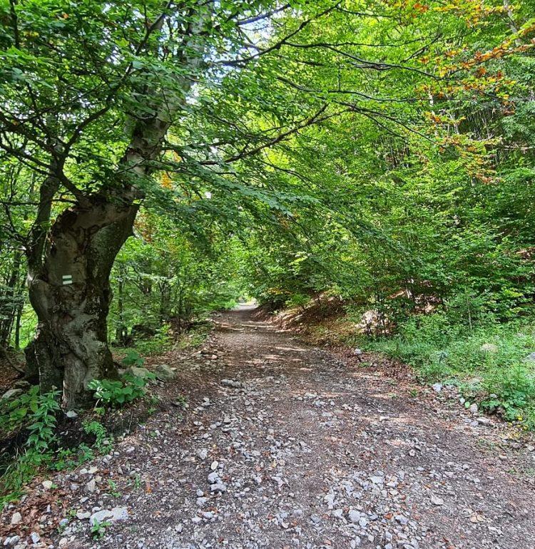 Lesná cesta na Kľak