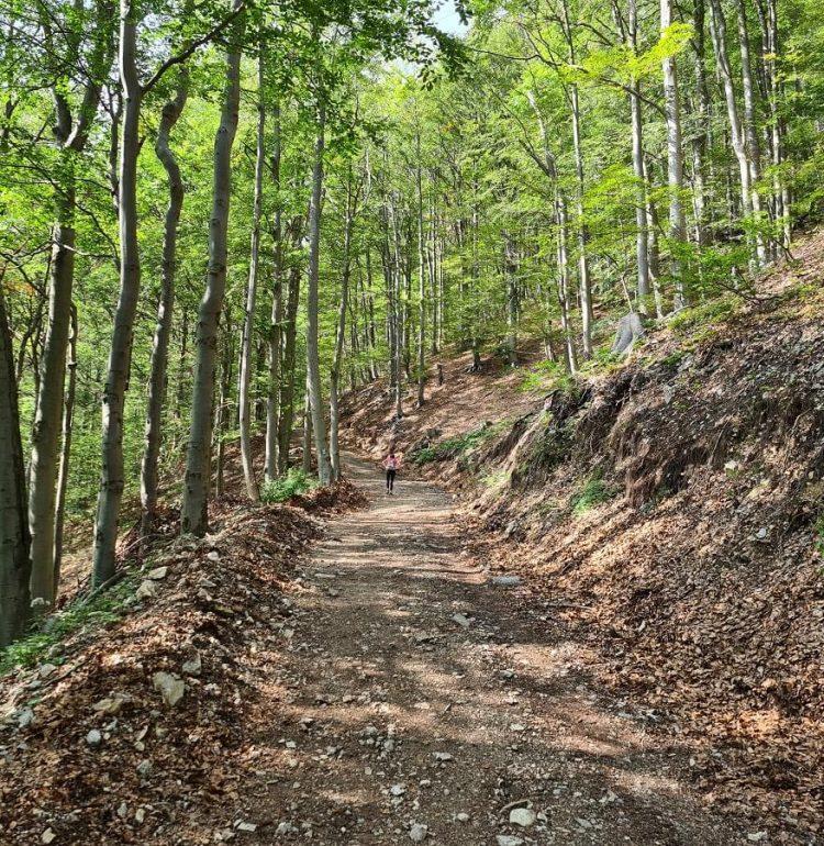 Lesna cesta na Kľak